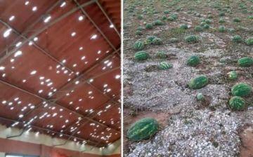 Granizada causa estragos y daña los cultivos en el área rural de Cochabamba
