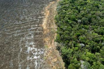 Un 94% de la deforestación en la Amazonía de Brasil es ilegal, según informe