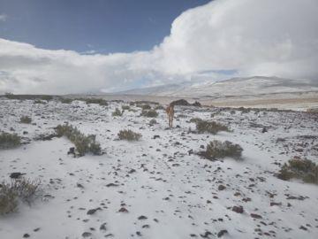 Vea las fotografías de la nevada en Quetena Chica