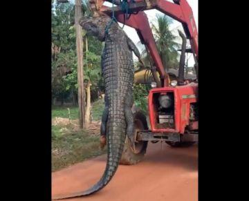 Ministerio de Medio Ambiente activa investigación por muerte de un caimán negro en el Beni