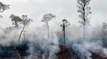 La pandemia no detiene la deforestación en la Amazonía, dirigentes demandan acciones
