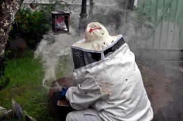 """""""Guardianas"""" de abejas se lanzan a su rescate en México"""