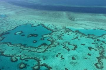 Australia se opondrá a incluir la Gran Barrera de Coral como patrimonio en peligro