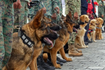 Perros afinan el olfato contra el covid-19 con sudor de enfermos en Ecuador