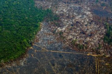 La deforestación en la Amazonía brasileña, cercana a su nivel récord