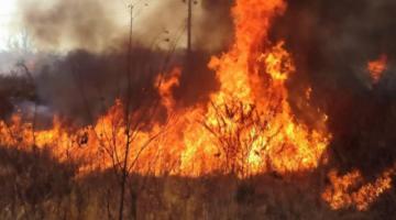 Gobierno identifica a responsables de incendios en municipios de San Matías y Roboré