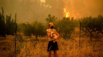Voluntarios se movilizan en Grecia para cuidar a gatos y perros tras los incendios
