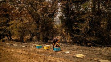 """""""Del paraíso al infierno"""", los apicultores de Eubea lo pierden todo por incendios"""
