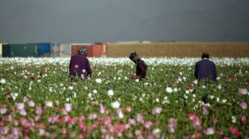Drogas y talibanes: El problema de la heroína en Afganistán
