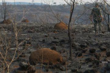 Incendio forestal arrasa parque estatal en Sao Paulo