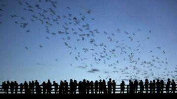 Entre peligros y secretos transcurre la vida del murciélago