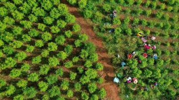 """En las tierras de """"San Coca"""", un viaje a la pujante economía ilegal de Colombia"""