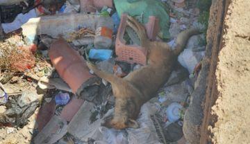 Confirman cuatro casos de rabia canina en Potosí