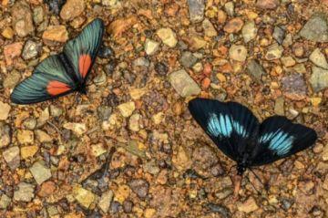 El fotógrafo de mariposas que retrató el universo alado de Colombia