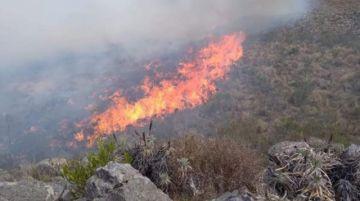 Presto: Alcalde reporta que incendio destruyó hábitat del oso jucumari