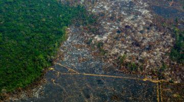 La UICN aprueba una moción que pide preservar el 80% de la cuenca amazónica de aquí a 2025