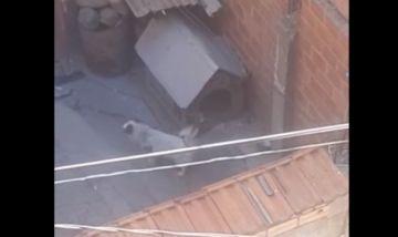 Denuncian que hace 8 años un perrito vive encadenado en una zona de La Paz