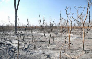 Según reporte del Cejis, en agosto se registraron 53.073 focos de calor