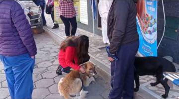La población acude a vacunar a sus perritos en domingo