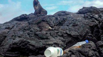 Recolectan 1.627 kilos de desechos en las islas ecuatorianas de Galápagos