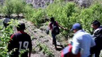 Reportan daños de granizada en cultivos de Puna y Ckochas