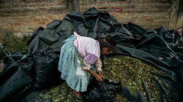 Los cocaleros peruanos, atrapados entre Sendero Luminoso y los narcos
