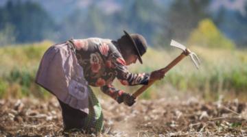 La crisis climática tiende a causar más hambre y las pequeñas comunidades agricultoras son las más afectadas