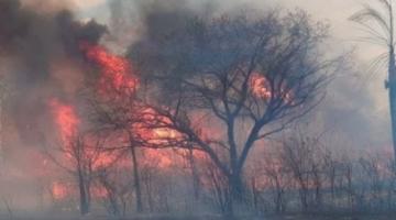 Informan que 2.463.731 hectáreas de bosque en Santa Cruz fueron afectadas por incendios, 58% están en áreas protegidas