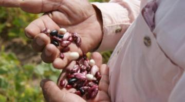 Exportación de hortalizas sumaron $us 267 millones en 9 años