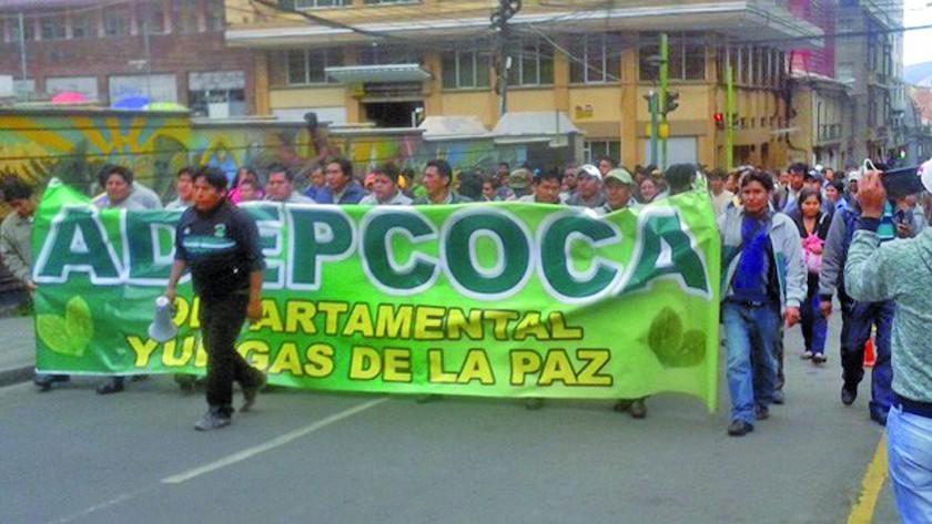 Gobierno advierte erradicar cocales en Los Yungas