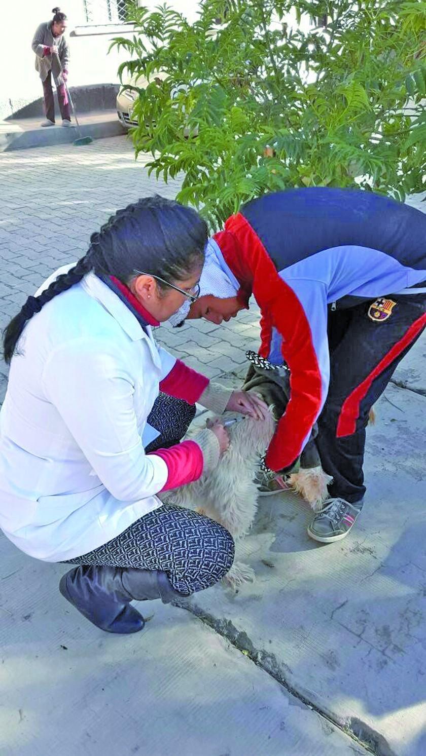 Casos de rabia canina en la ciudad ya son 27 y supera los seis de 2017