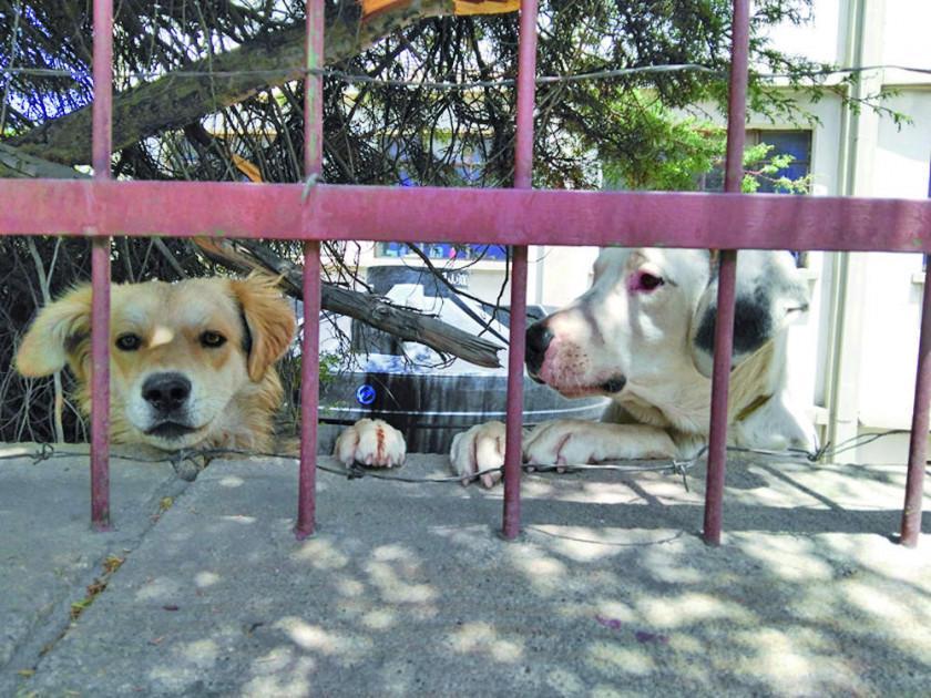 Ya son 32 casos de  rabia canina en la ciudad