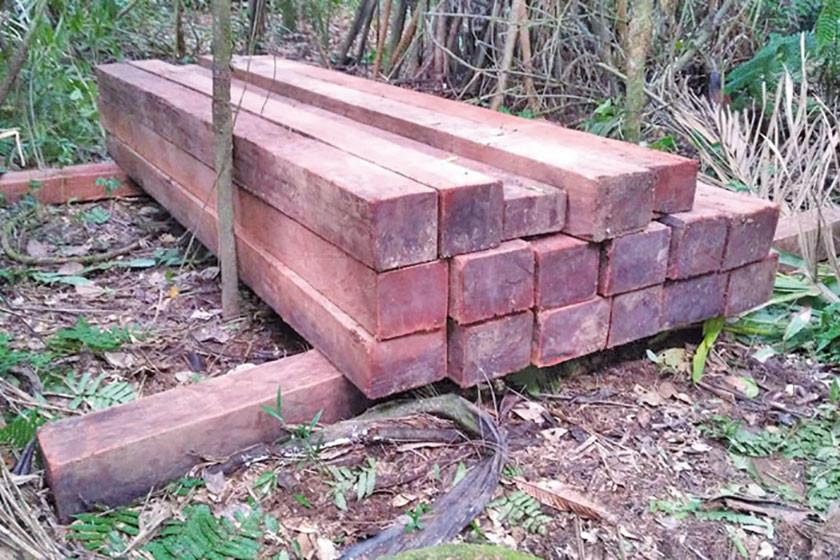 Traficantes dejan tablones de madera mara en el Amboró