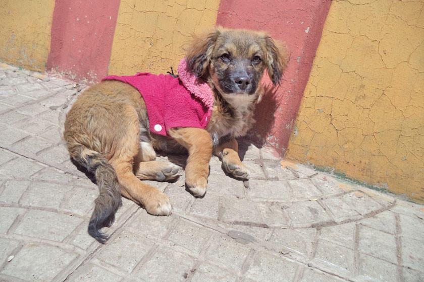 Alistan camapaña para vacunar cachorros