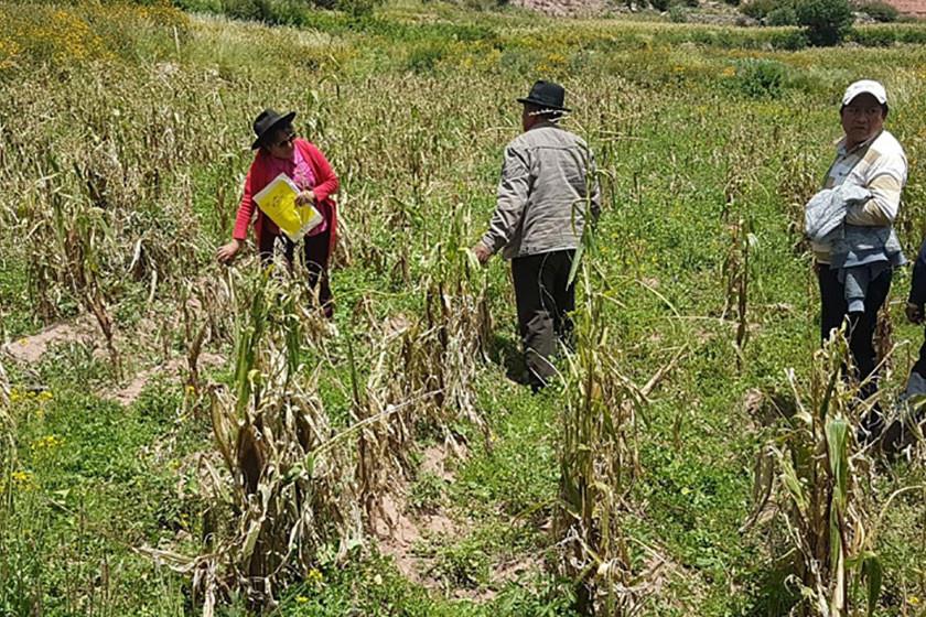 Tarapaya, Mondragón y Paranturí perdieron casi 90 % de cultivos