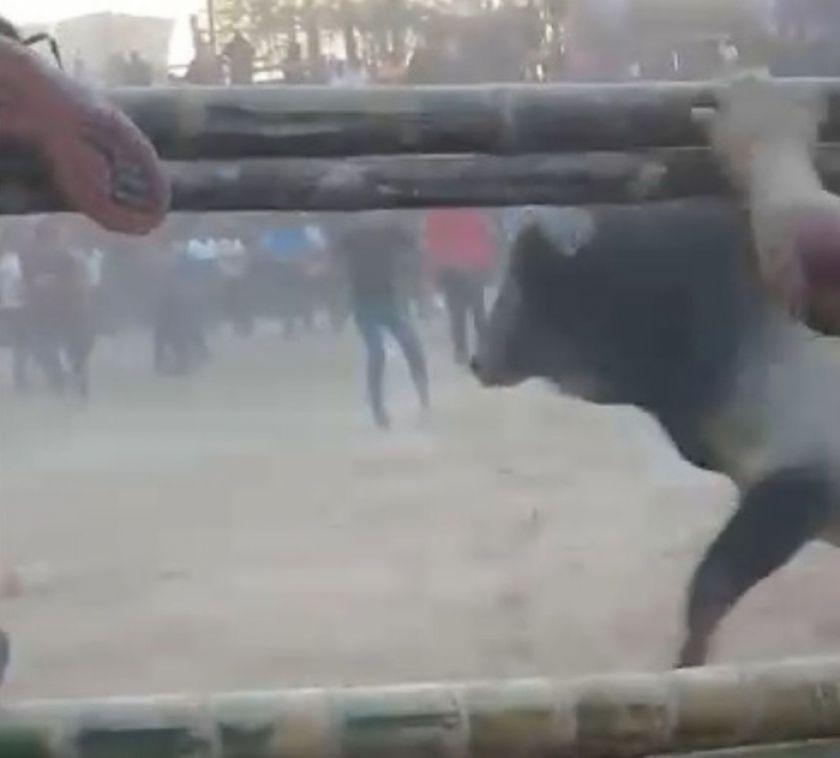 Jocheo de toros en San Ignacio de Moxos deja un muerto