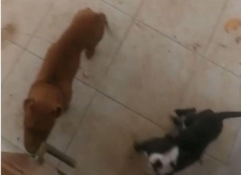 Alcaldía encuentra dos perros que una portera ocultaba en un bien municipal