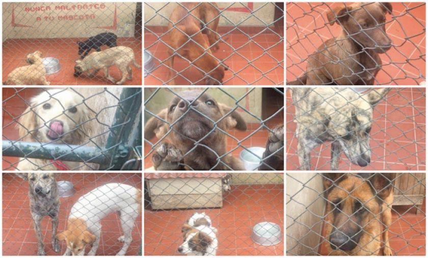 Perritos esperan ser adoptados en el Centro Municipal de Zoonosis