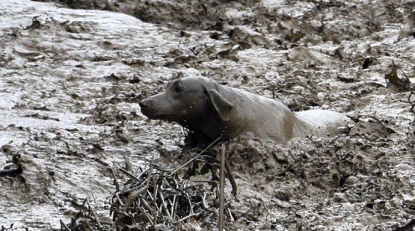 Se intensifica el rescate de mascotas tras el desborde del río Taquiña