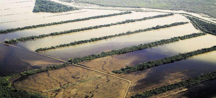 Las inundaciones y la sequía afectan a productores de soya