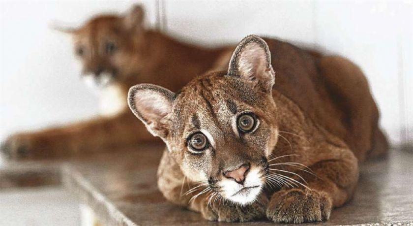 Cuarentena: 4.000 animales silvestres están en riesgo