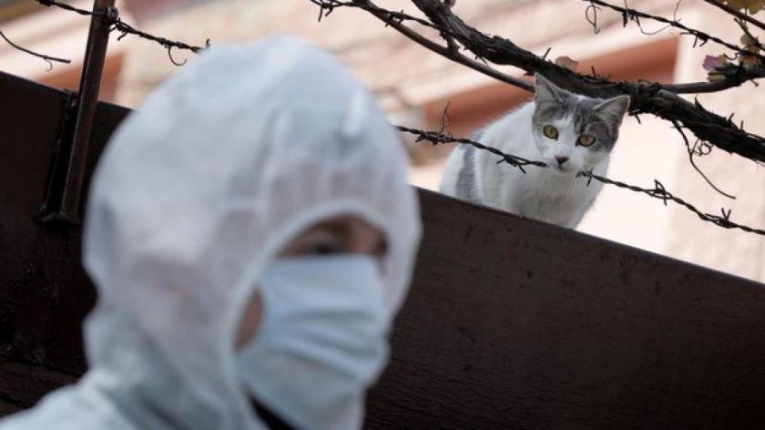 Una investigación detecta un gato con coronavirus asintomático y sano