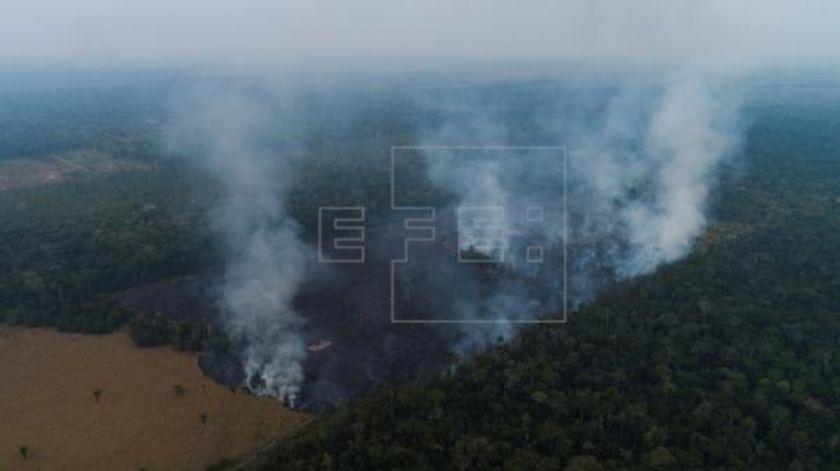 La deforestación en la Amazonía brasileña en 2019 fue la mayor en once años