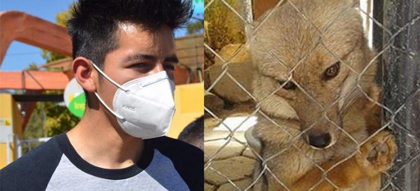 El zorro Antonio se volvió a reunir con su amo, mientras analizan su retorno a Oruro