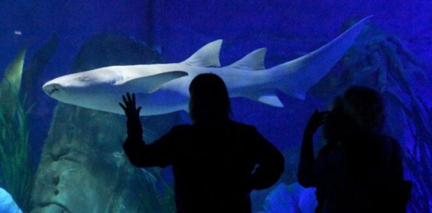Un hombre muere tras ser atacado por un tiburón en una playa de Australia