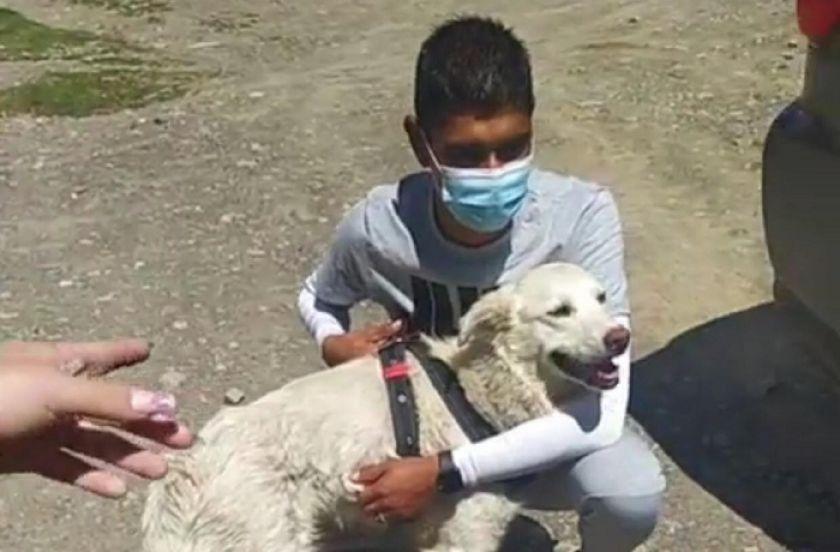 """""""Cachito"""", el perro que irrumpió en un partido Tigre -Nacional, ya tiene un hogar"""