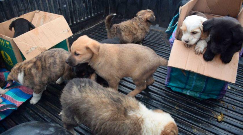 Rescatan a 13 perros y 10 gatos que eran vendidos en la Feria 16 de Julio de El Alto