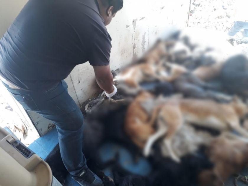 Alcalde intenta desmentir actualidad de fotos de cadáveres de perros