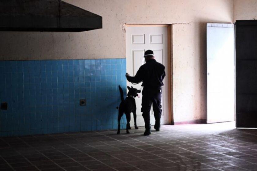 El Salvador entrena perros para detectar covid-19 en aeropuerto
