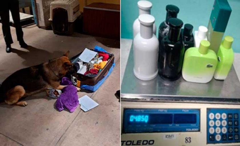 Can detectó droga que se pretendía hacer pasar como perfume y desodorante